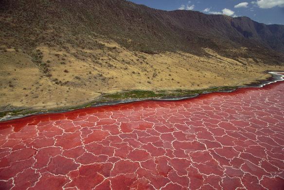 Lake Natron Tanzania' Africa's Most Dangerous Water Body