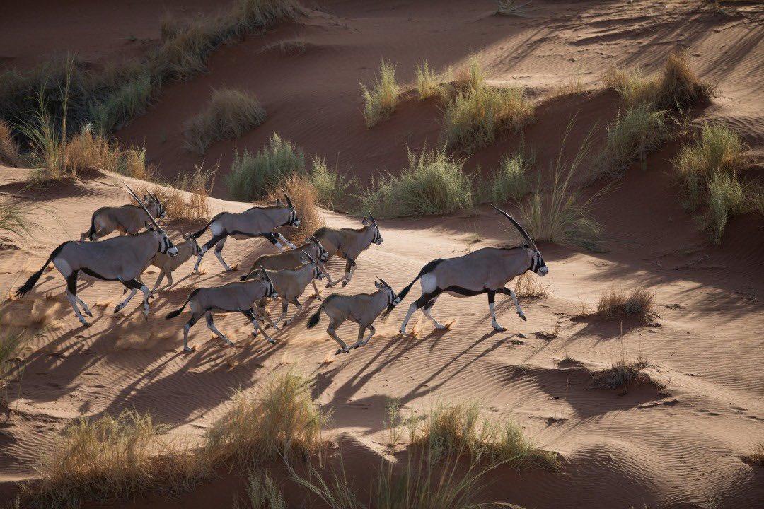 Namib Desert in Namibia' The World's Oldest Desert