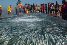 Marine Wildlife: The Sardine Run The Biggest Marine Wildlife Movement