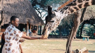 African Safari in Kenya Nairobi; The 5 Best Safari Parks in Kenya to Explore