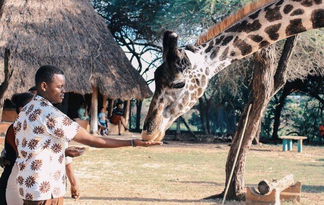African Safari in Kenya Nairobi; The 5 Best Safari Parks in Kenya to Explore