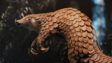 The Pangolin: Why Is the Pangolin Endangered? - Africa Facts Zone