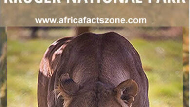 Safari in Kruger National Park, South Africa - Africa Facts Zone
