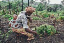Investment Opportunities in Côte d'Ivoire; From Agriculture to Mining