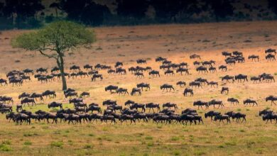 Top African Safari Wildlife Park And Its Thrilling Scenery